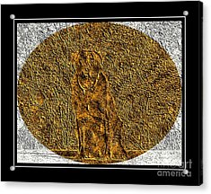 Brass Etching - Oval - Labrador Retriever Acrylic Print by Barbara Griffin