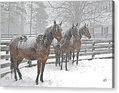 Acrylic Print featuring the photograph Braving The Storm by Gary Hall