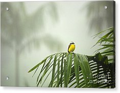 Break From The Crowds - Costa Rica Acrylic Print by Matt Tilghman
