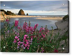 Breakers Point Oregon Acrylic Print