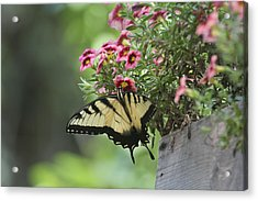 Breakfast At The Windowbox Acrylic Print
