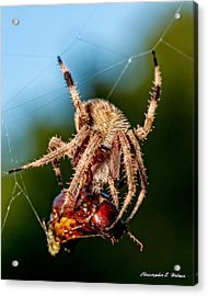 Breakfast Acrylic Print by Christopher Holmes