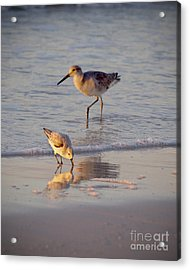 Breakfast In The Surf Acrylic Print