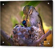 Breakfast Acrylic Print by Robert Bales