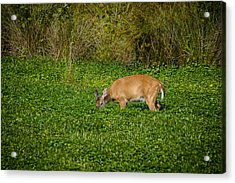 Acrylic Print featuring the photograph Breakfast Time by Bradley Clay