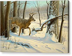 Breaking Cover-whitetail Acrylic Print by Paul Krapf
