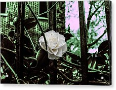 Breaking Free  Acrylic Print by Steven  Taylor