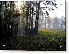 Breaking Through Morning Fog Acrylic Print