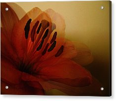 Breath Of The Lily Acrylic Print by Marianna Mills