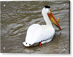 Breeding Plumage Acrylic Print