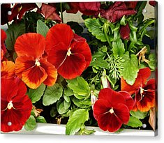 Acrylic Print featuring the photograph Brick Pansies by VLee Watson