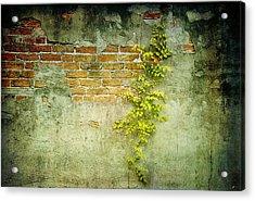 Brick Wall Acrylic Print by Linda Olsen