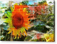 Bricks And Sunflowers Acrylic Print
