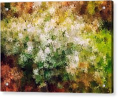 Bridal's Wreath Acrylic Print by Brenda Bryant