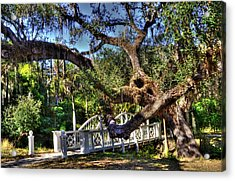 Bridge At Koreshan State Park - Estero Florida Acrylic Print by Timothy Lowry