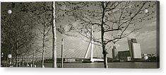 Bridge Over A River, Erasmus Bridge Acrylic Print