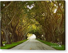 Bridge Road Banyans Acrylic Print