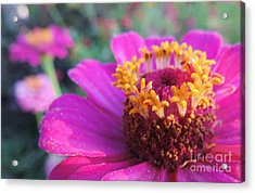 Bridgets Bloom Acrylic Print by Robert ONeil