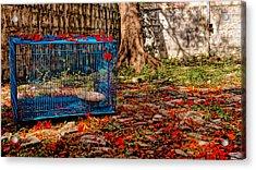 Brid's Cage Acrylic Print by Utkarsh Solanki