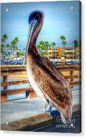 Brief Pelican Encounter  Acrylic Print by Susan Garren