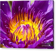 Bright And Bold Acrylic Print by Sabrina L Ryan