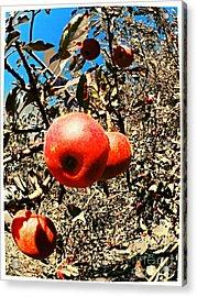 Bright Apples Acrylic Print by Garren Zanker