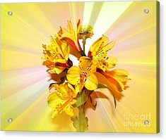 Bright As The Sun Acrylic Print by Carol Grenier