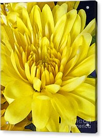 Bright As The Sun Acrylic Print by Cedric Hampton
