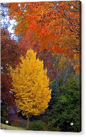 Bright Autumn Acrylic Print