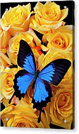 Bright Blue Butterfly On Yellow Roses Acrylic Print by Garry Gay