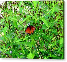 Bright Butterfly Acrylic Print by David  Norman