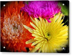 Bright Chrysanthemums Acrylic Print by The Art of Alice Terrill