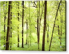 Bright Green Forest In Spring With Beautiful Soft Light  Acrylic Print by Matthias Hauser