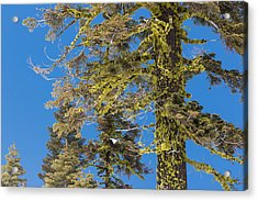 Bright Lichen Acrylic Print by Jan Davies