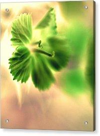 Bright One Acrylic Print by Christine Ricker Brandt