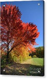 Bright Orange Of Fall Acrylic Print by Amy Cicconi