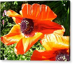 Bright Orange Poppy Acrylic Print