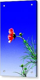 Bright Pink Bloom Acrylic Print by Tina M Wenger