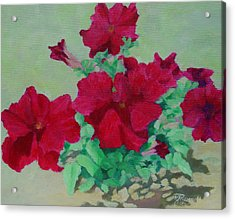 Red Flowers Art Brilliant Petunias Bright Floral  Acrylic Print
