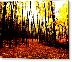 Bright Woods Acrylic Print