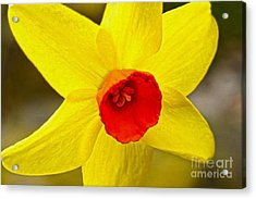 Bright Yellow Acrylic Print by Nur Roy