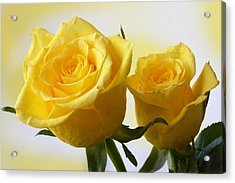 Bright Yellow Roses. Acrylic Print by Terence Davis