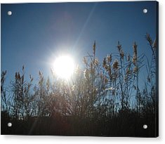 Brilliance In The Grasses Acrylic Print