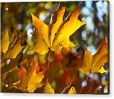Brilliant Autumn Light And Color Acrylic Print by Dan Sproul