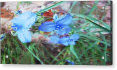 Acrylic Print featuring the photograph Brilliant Blue Flowers by Cathy Anderson
