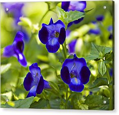 Brilliant Blues  Acrylic Print
