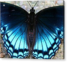 Brilliant Butterfly Acrylic Print by Candice Trimble