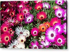Acrylic Print featuring the photograph Brilliant Flowers by Chalet Roome-Rigdon