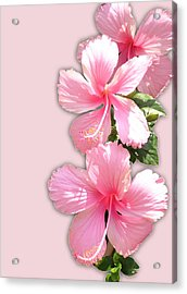 Brilliant Pink Hibiscuses Acrylic Print by Karen Nicholson