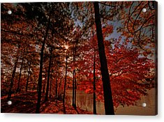 Acrylic Print featuring the photograph Brilliant Shade by John Harding